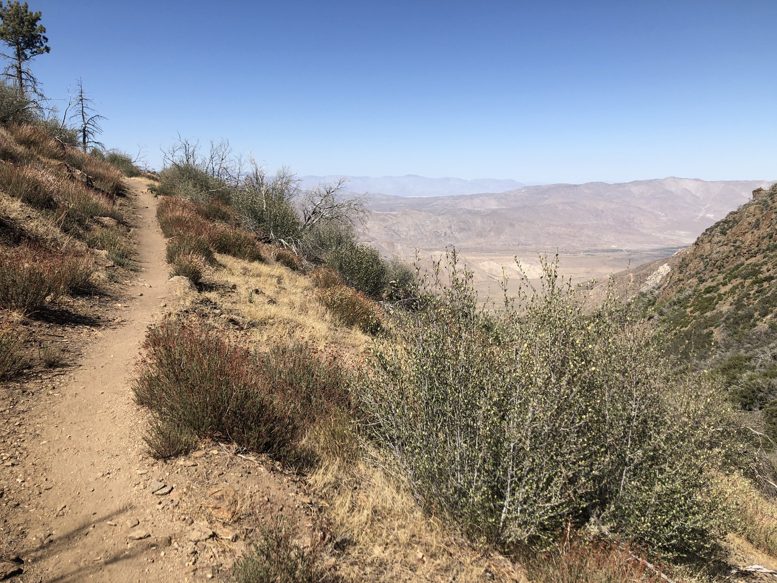 Last bit of the PCT before turning back to the trailhead.