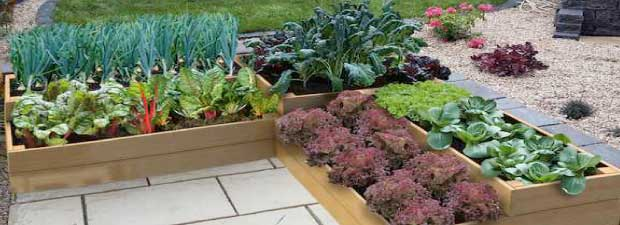 raised-bed-experts-new.jpg