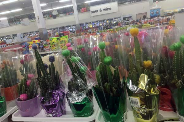 Even CVS Pharmacy peddles the visually-enhanced plants. (Photo:  Jessie Schiewe )