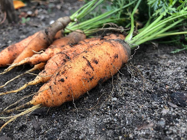 Be weary of carrots, unless you like burning sensations.