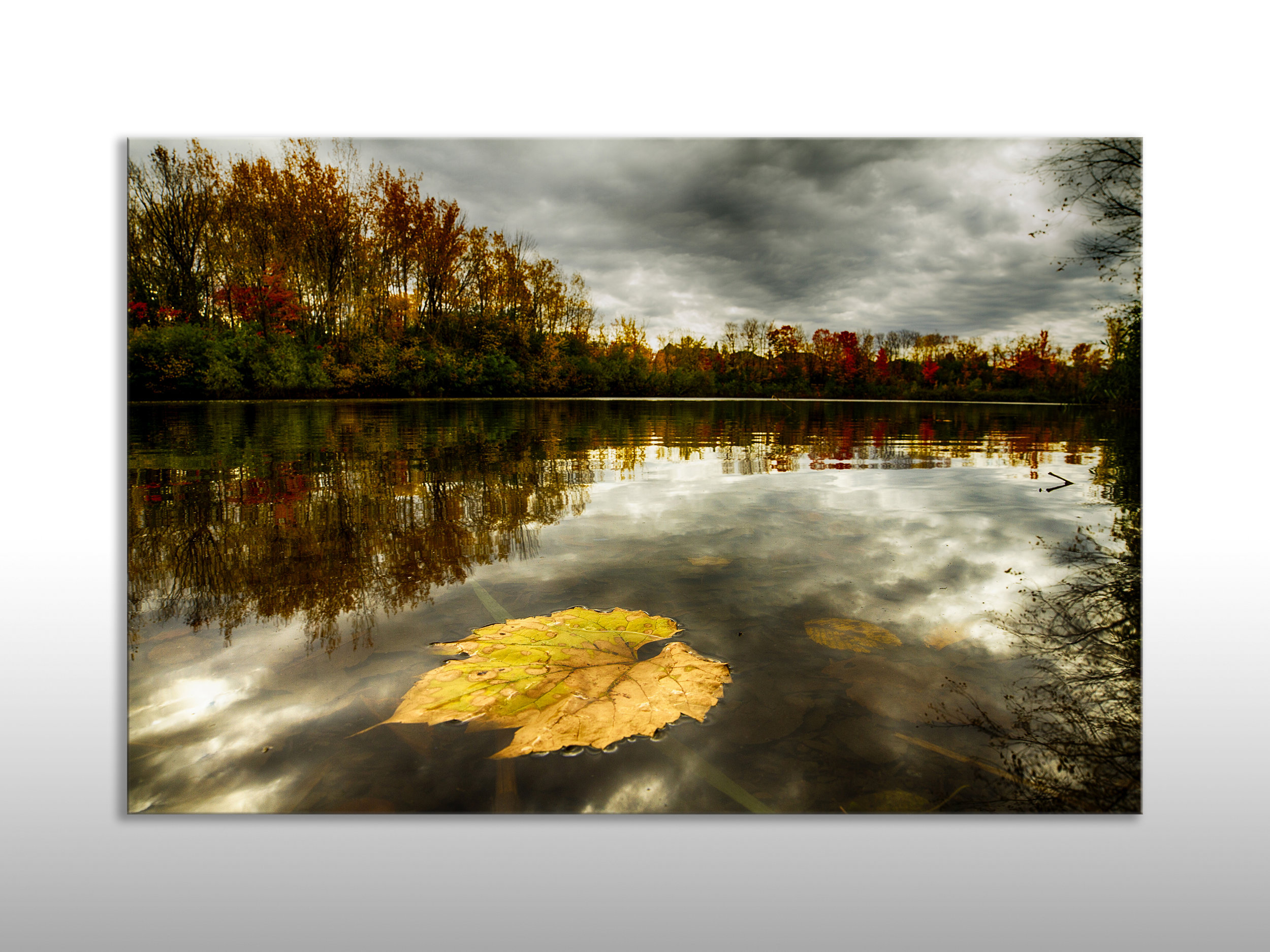 MQC Pond.jpg