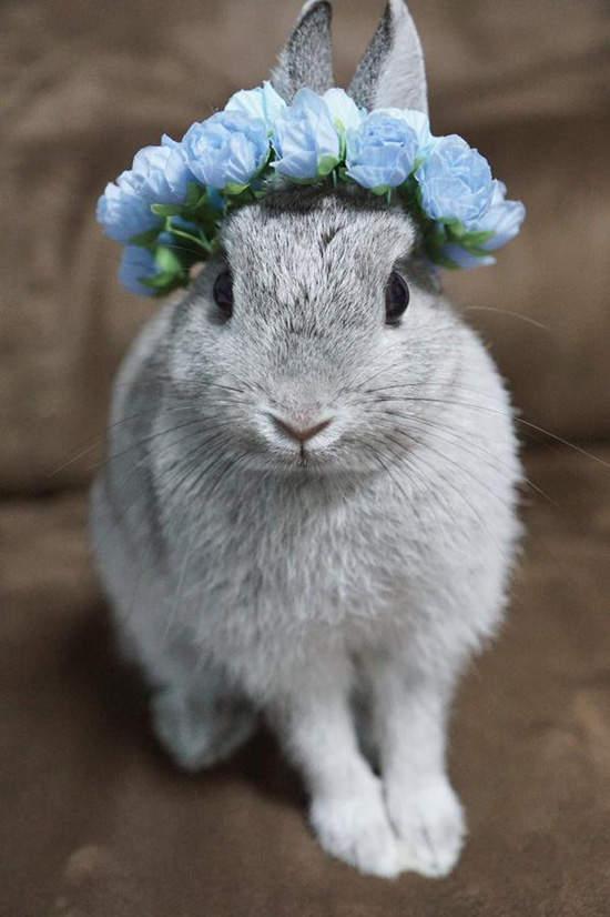 Cute Easter Rabbit