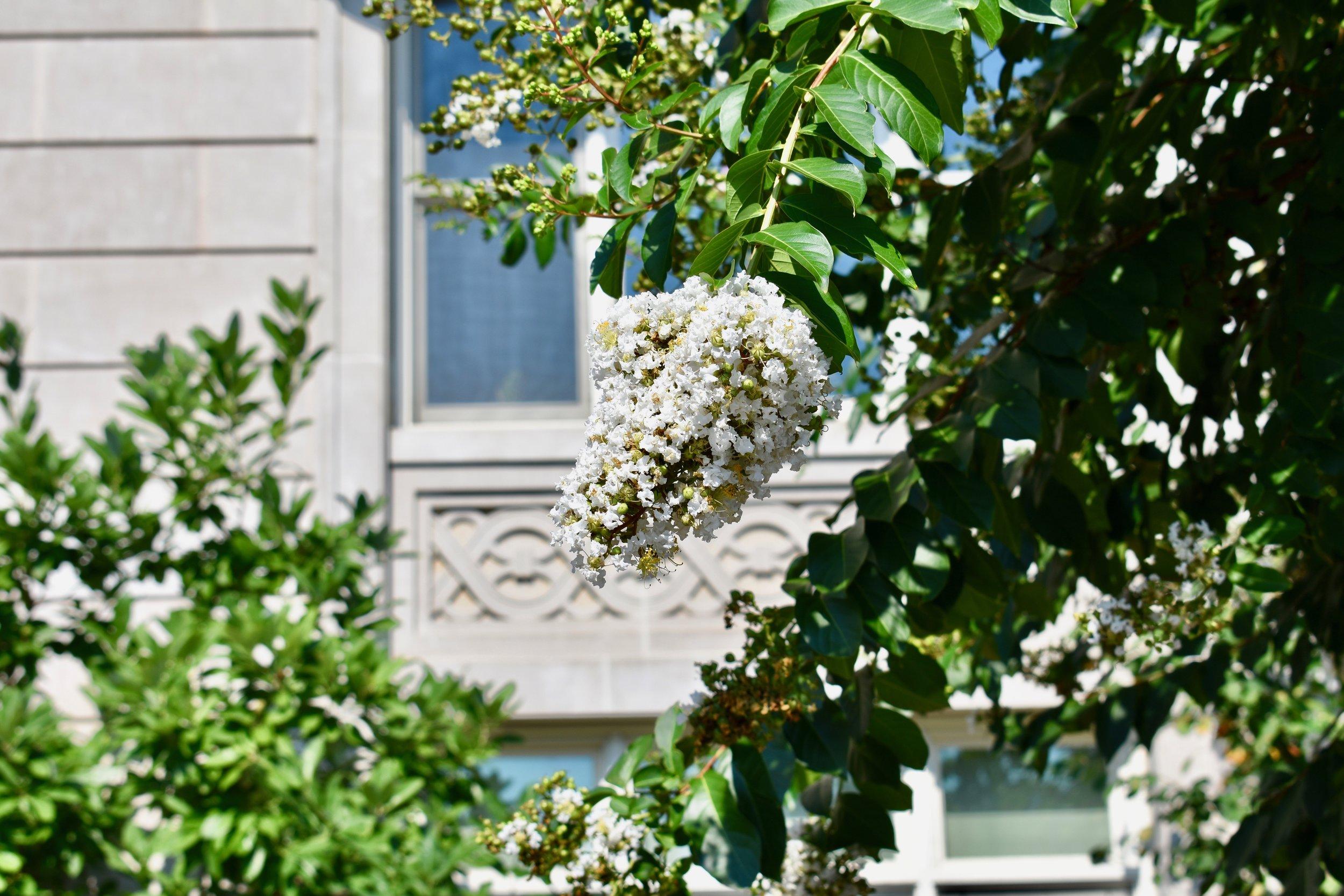Pretty flowers in Washington D.C.