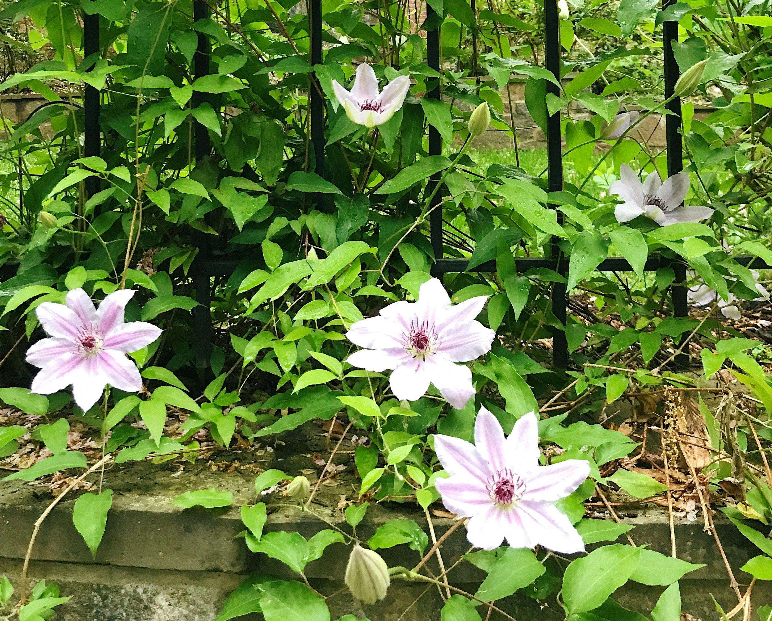 Georgetown Flowers