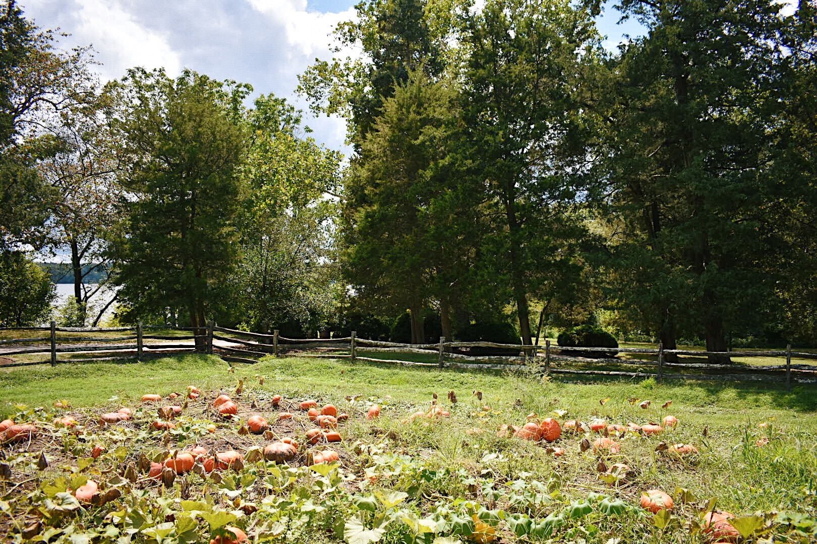 Mt Vernon in the fall