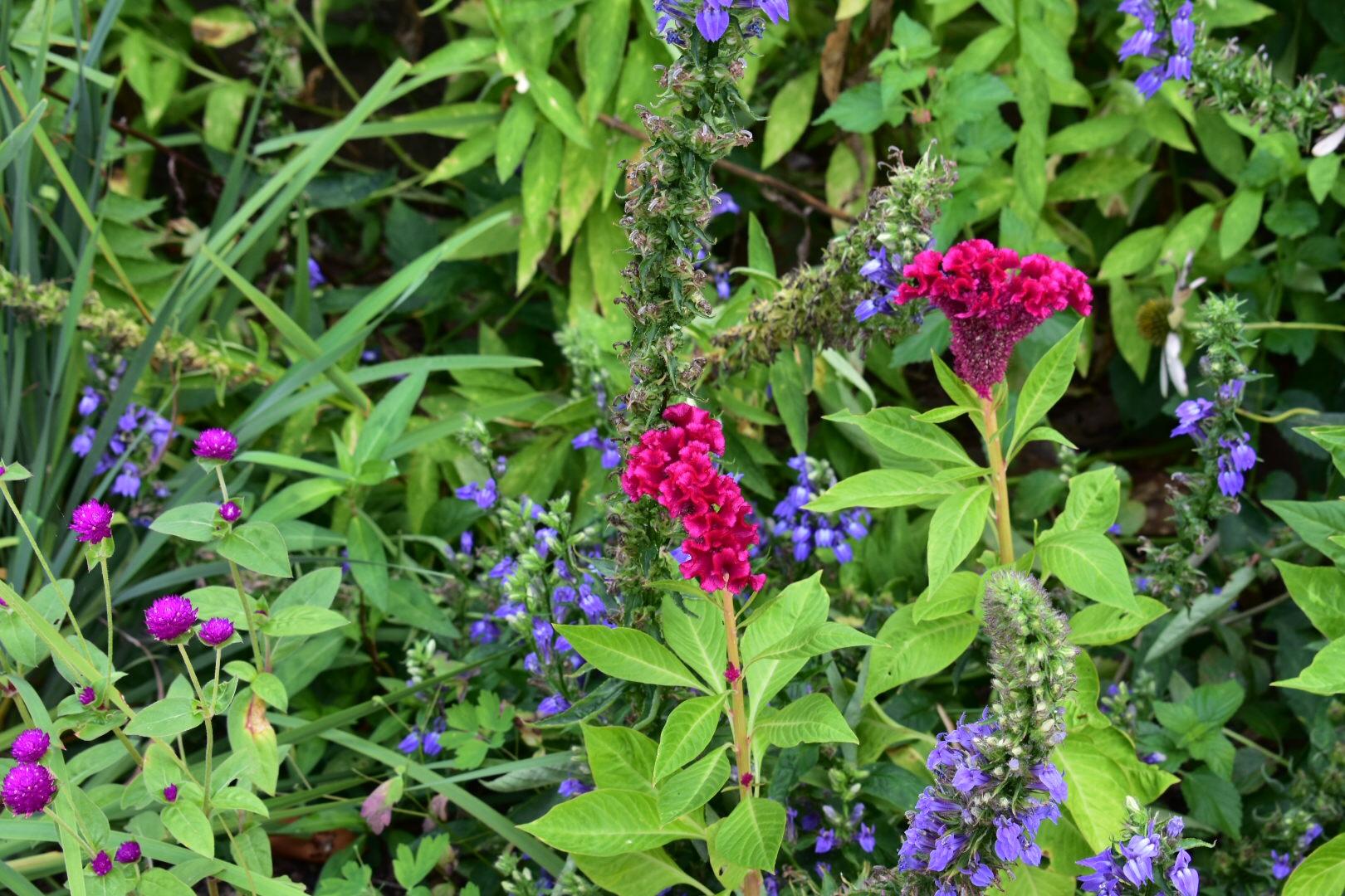 Mount Vernon flowers