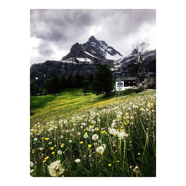 Today was all about heavy clouds, endless mountain flower fields and some remaining bits of snow #swisssummer #heitersummer #thehillsarealive . . . . #amonthoflovely  #agameoftones #vscocam #vscogood #darlingweekend  #darlingmovement #momentsofmine #aquietstyle  #mountainsaremyhome #swissmountains #wanderlost  #wanderlusting #simplethingsmadebeautiful #myswitzerland #switzerland #amazingswitzerland #pursuepretty #flashesofdelight #inspiremyinstagram #beautiful_destinations #whatwedidthissummer #searchwandercollect #topswitzerlandphoto #throughthepines #visitswitzerland #ig_landscapes