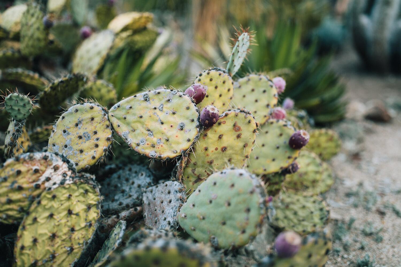 2018_10_ 212018.10.22 Lawrence Family Session Arizona Garden Blog Photos Edited For Web 0025.jpg
