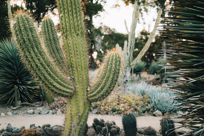 2018_10_ 212018.10.22 Lawrence Family Session Arizona Garden Blog Photos Edited For Web 0027.jpg