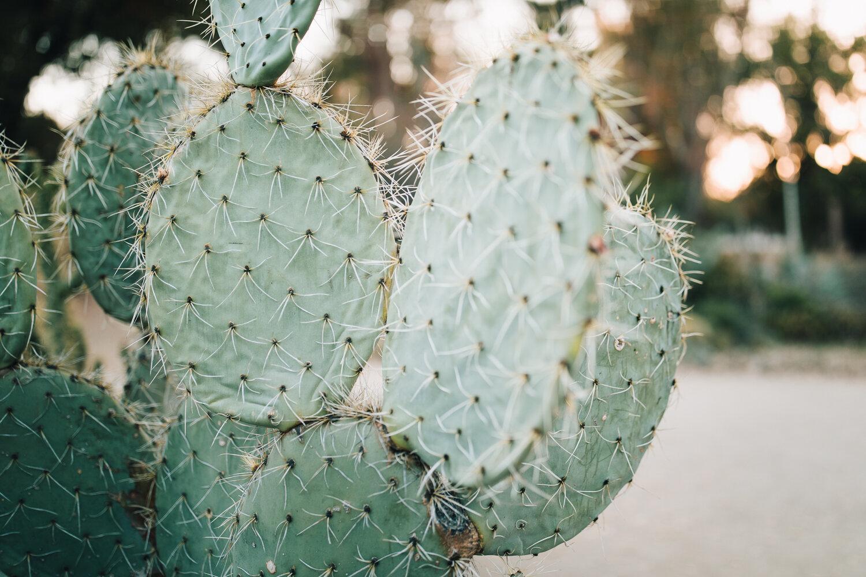 2018_10_ 212018.10.22 Lawrence Family Session Arizona Garden Blog Photos Edited For Web 0029.jpg