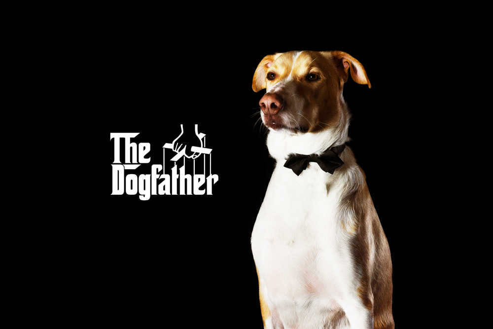 thedogfather.jpg