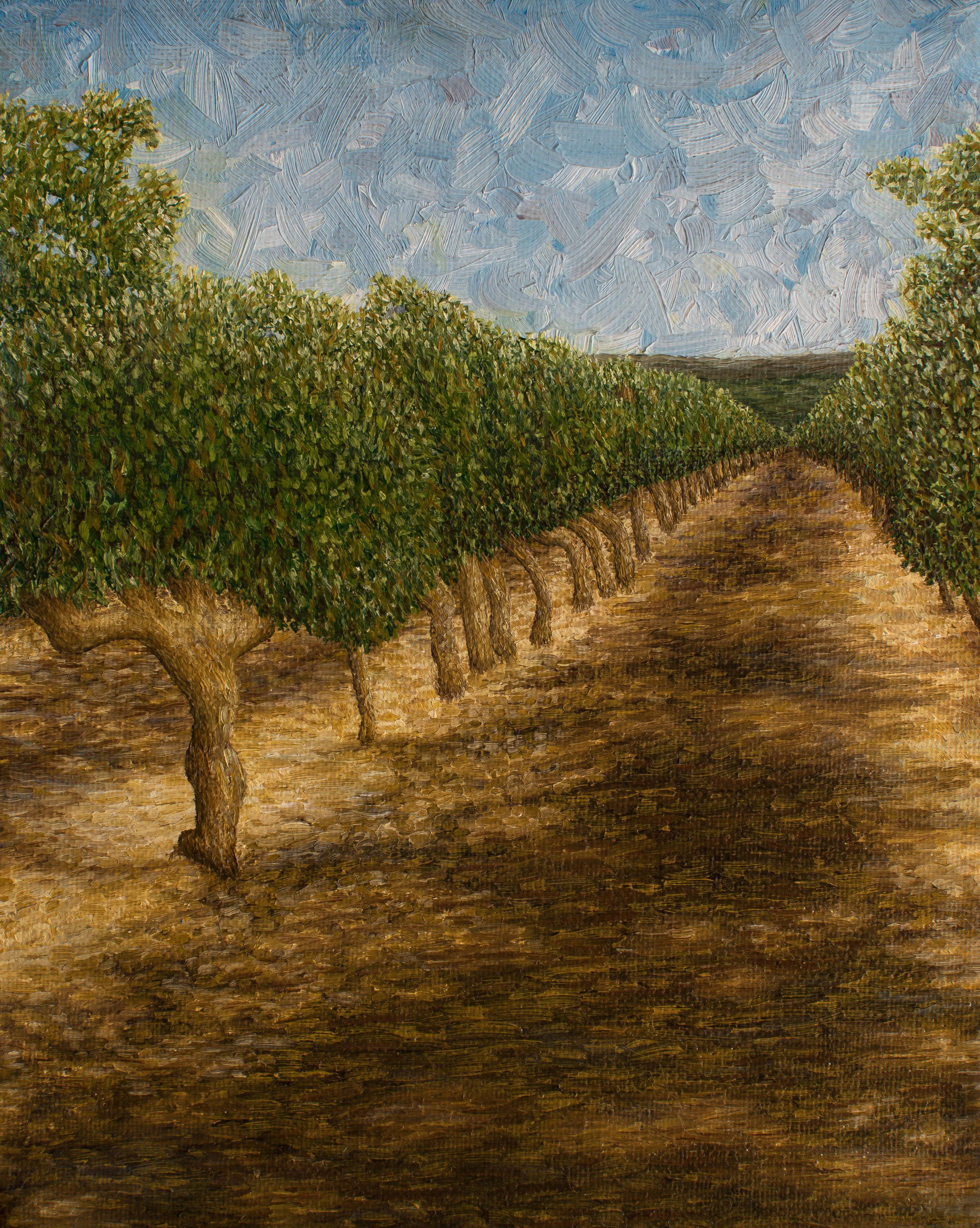 Vineyard à  Domaine Citadelle
