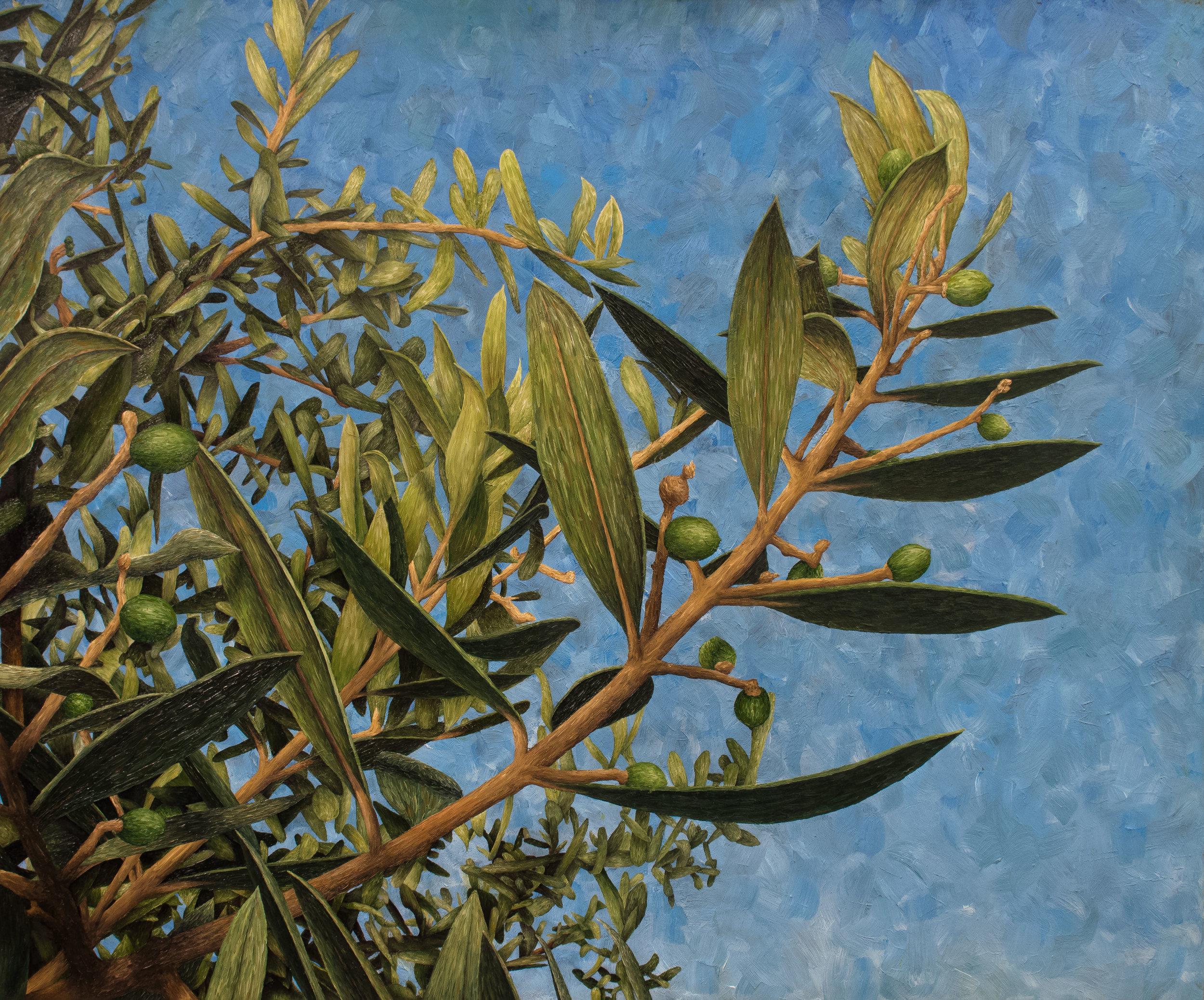 Olives à Claviers