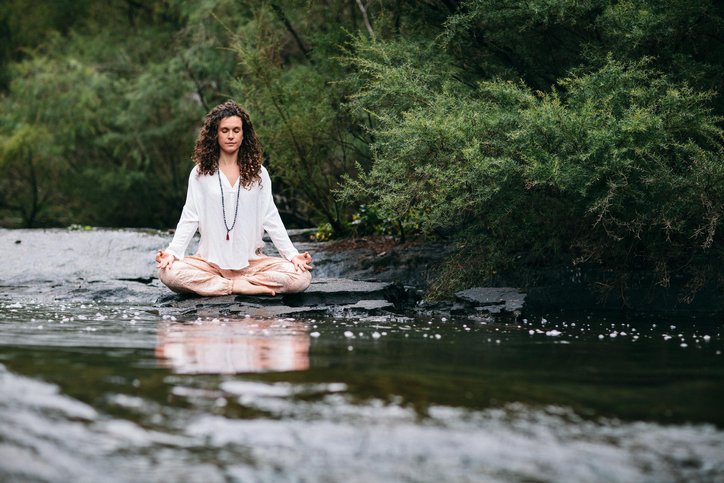 yogi-23.jpg
