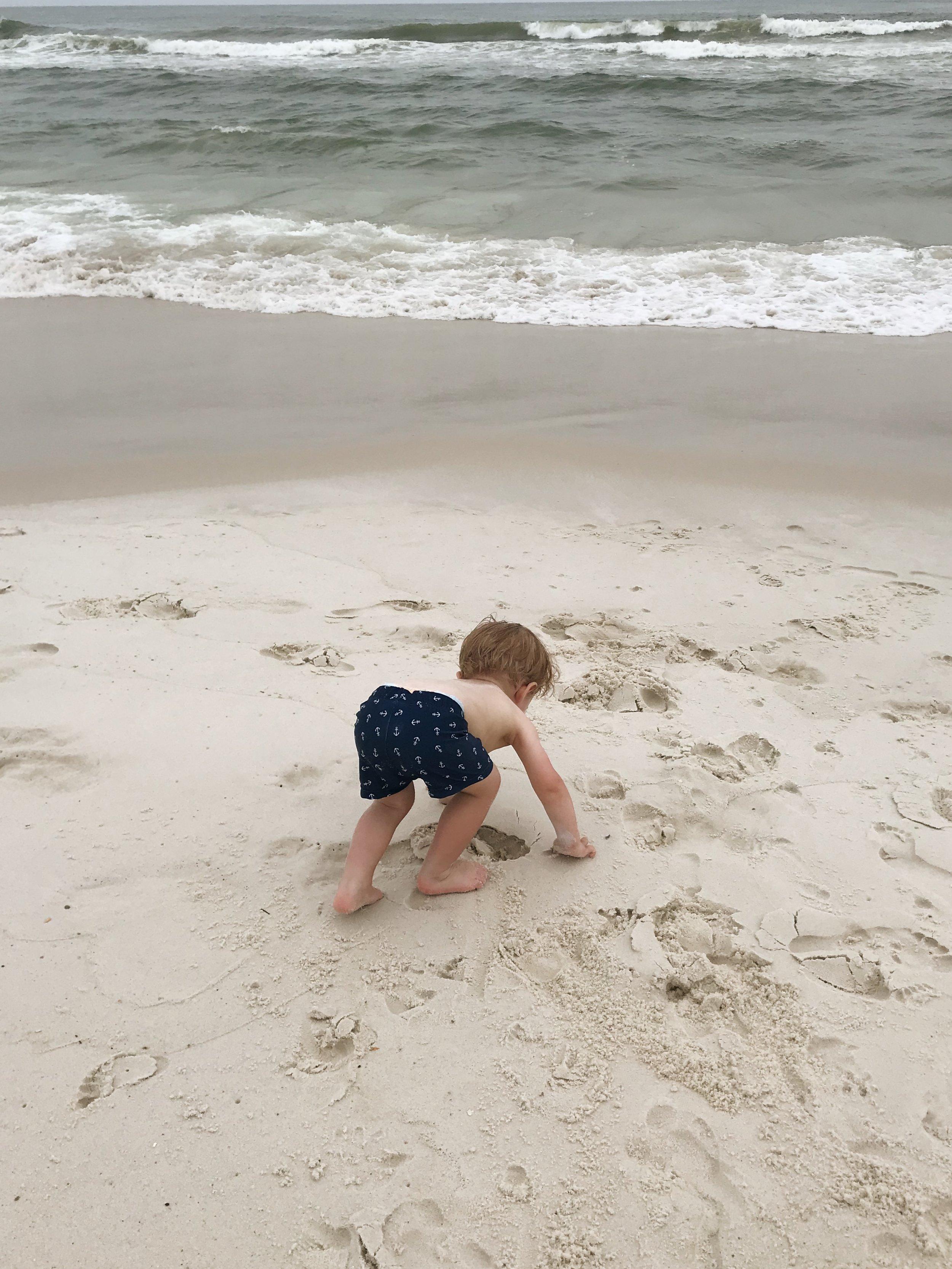 Patrick crab walking on the beach.