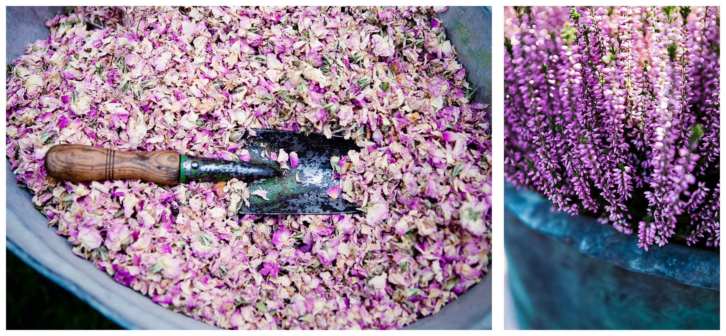 Katie Spicer Lifestyle Photography Dried Rose Petals.jpg