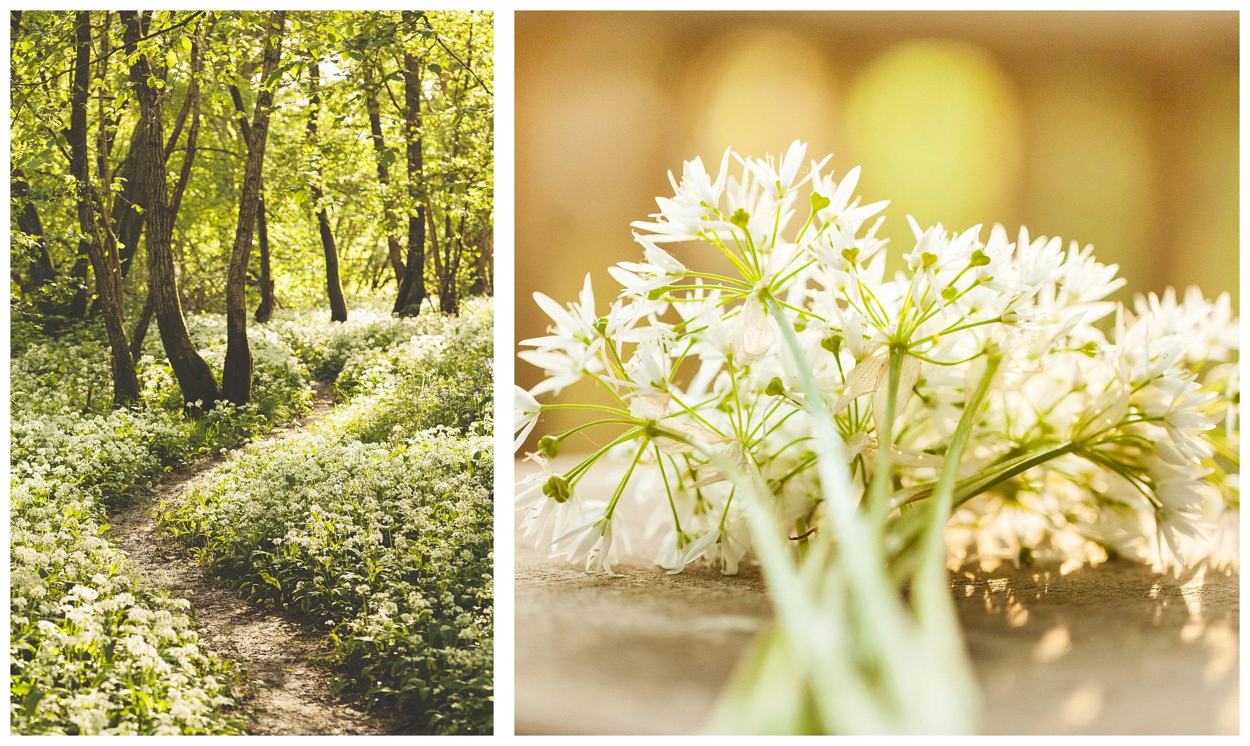 Katie Spicer Photography - Wild Garlic -.jpg