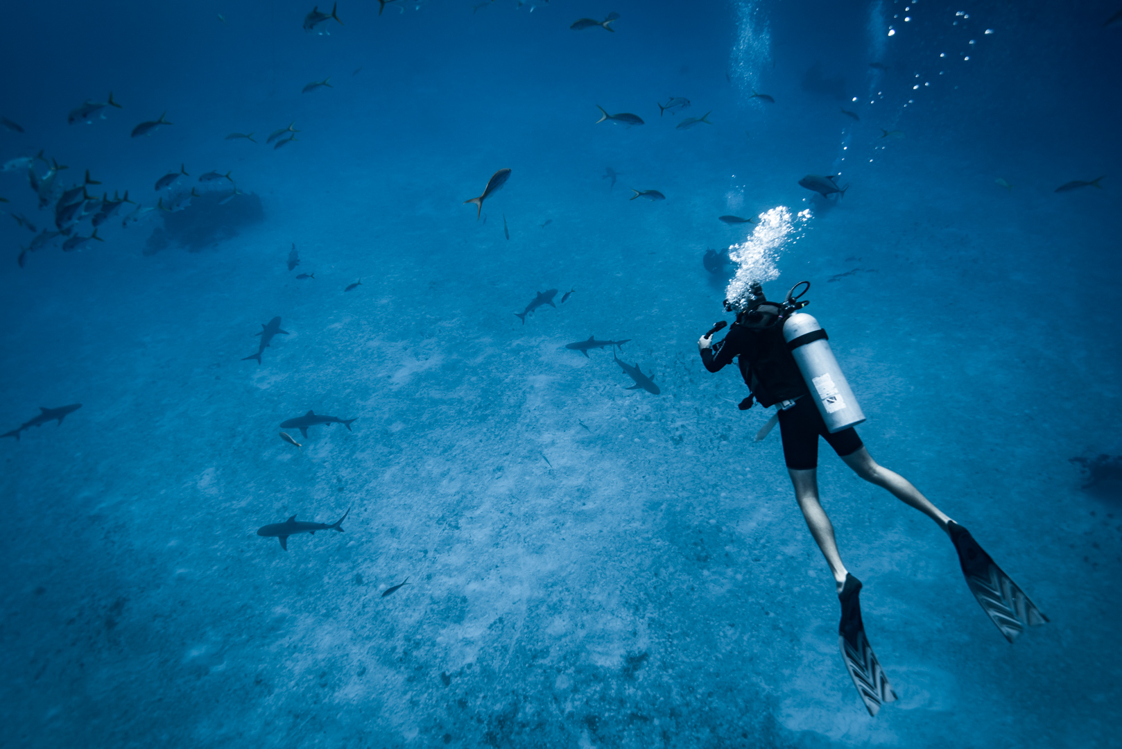 Swimming with sharks in the Bahamas-2.jpg