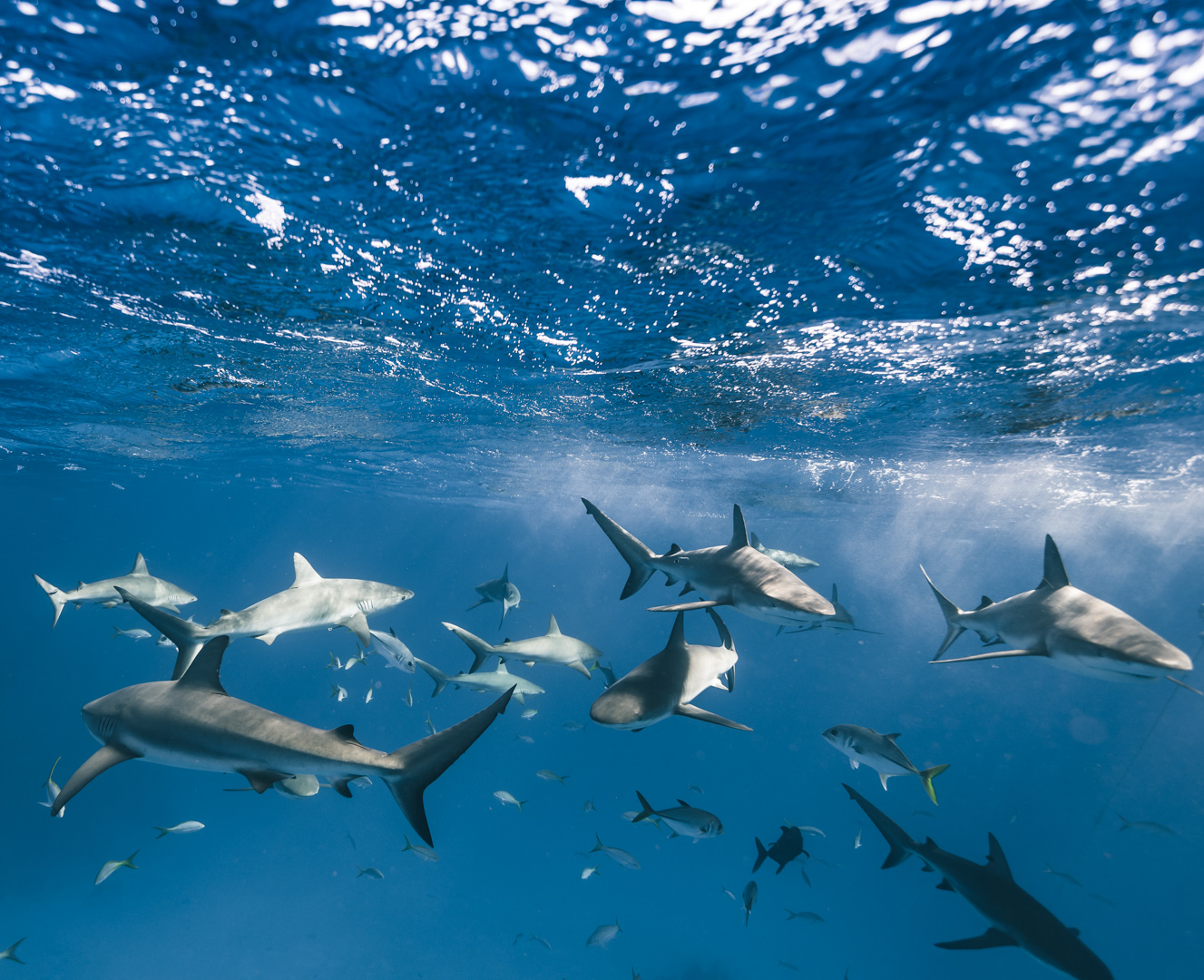 Swimming with sharks in the Bahamas-3.jpg