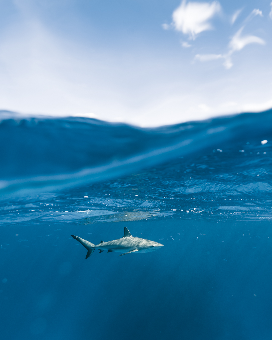 Swimming with sharks in the Bahamas-4.jpg