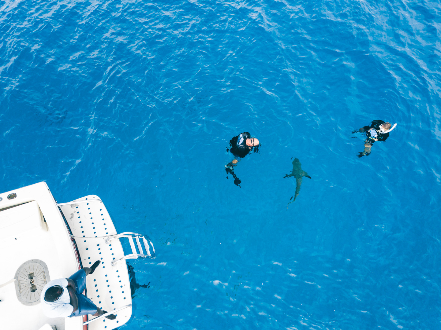Swimming with sharks in the Bahamas-5.jpg