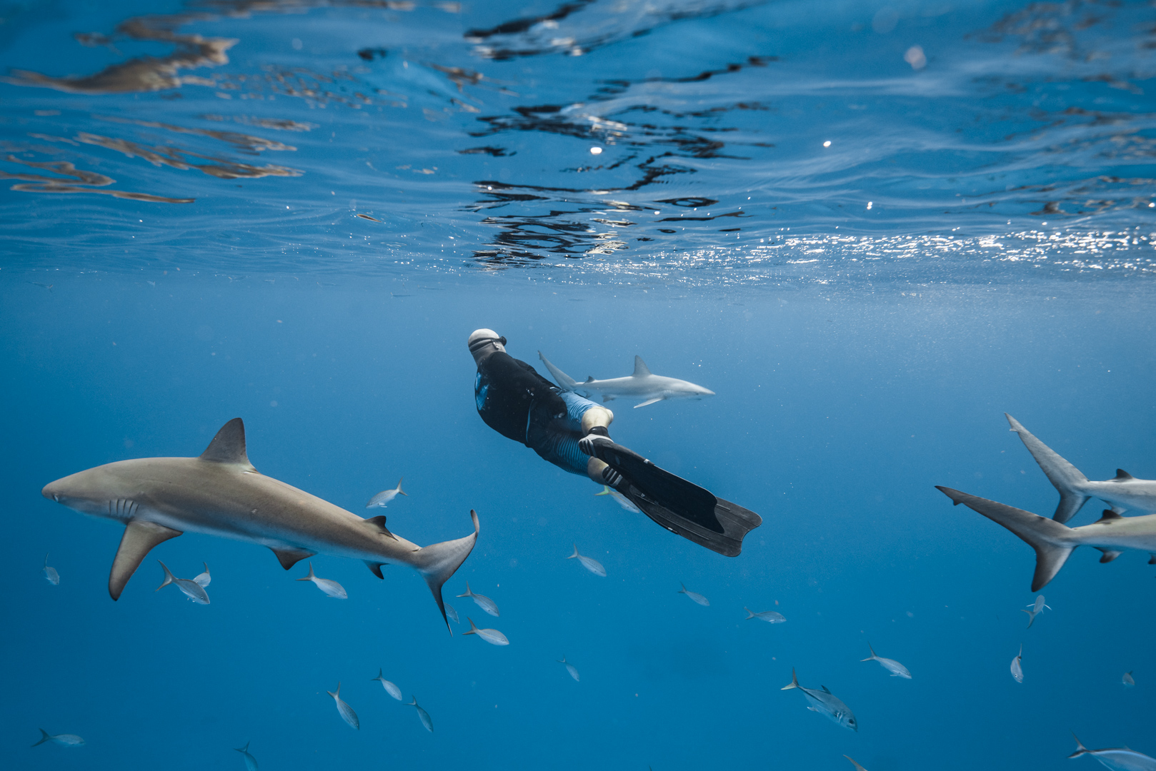 Swimming with sharks in the Bahamas-6.jpg