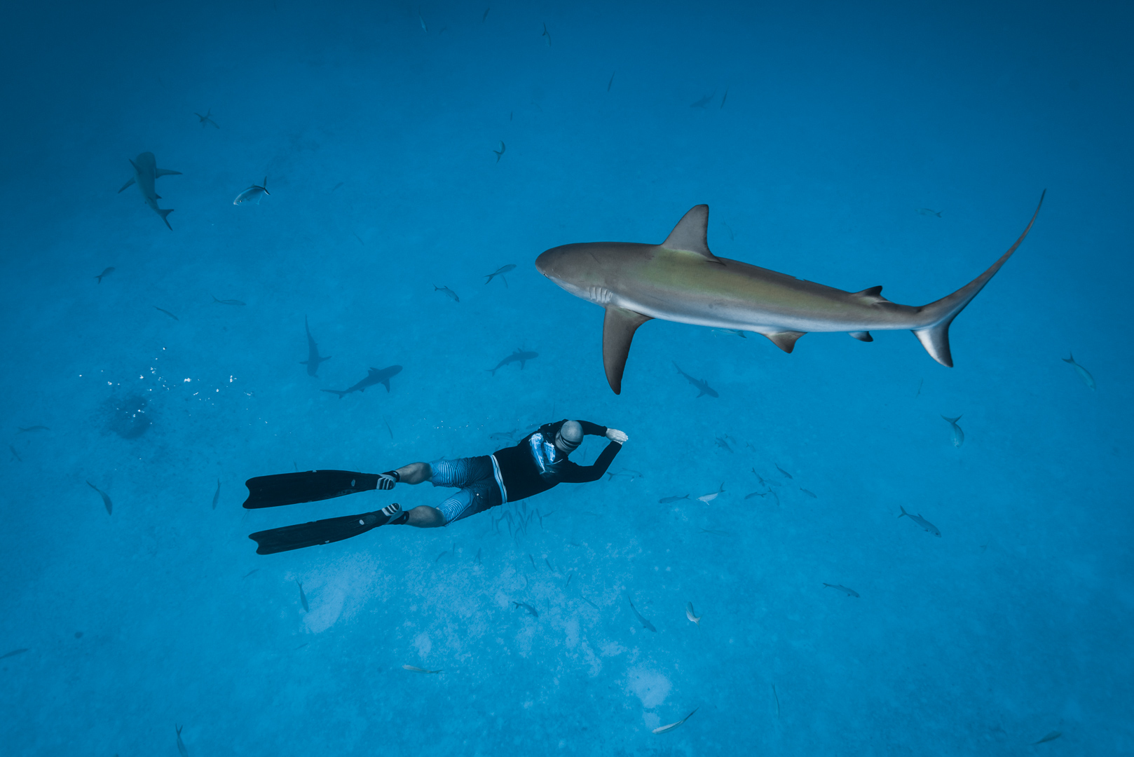 Swimming with sharks in the Bahamas-7.jpg
