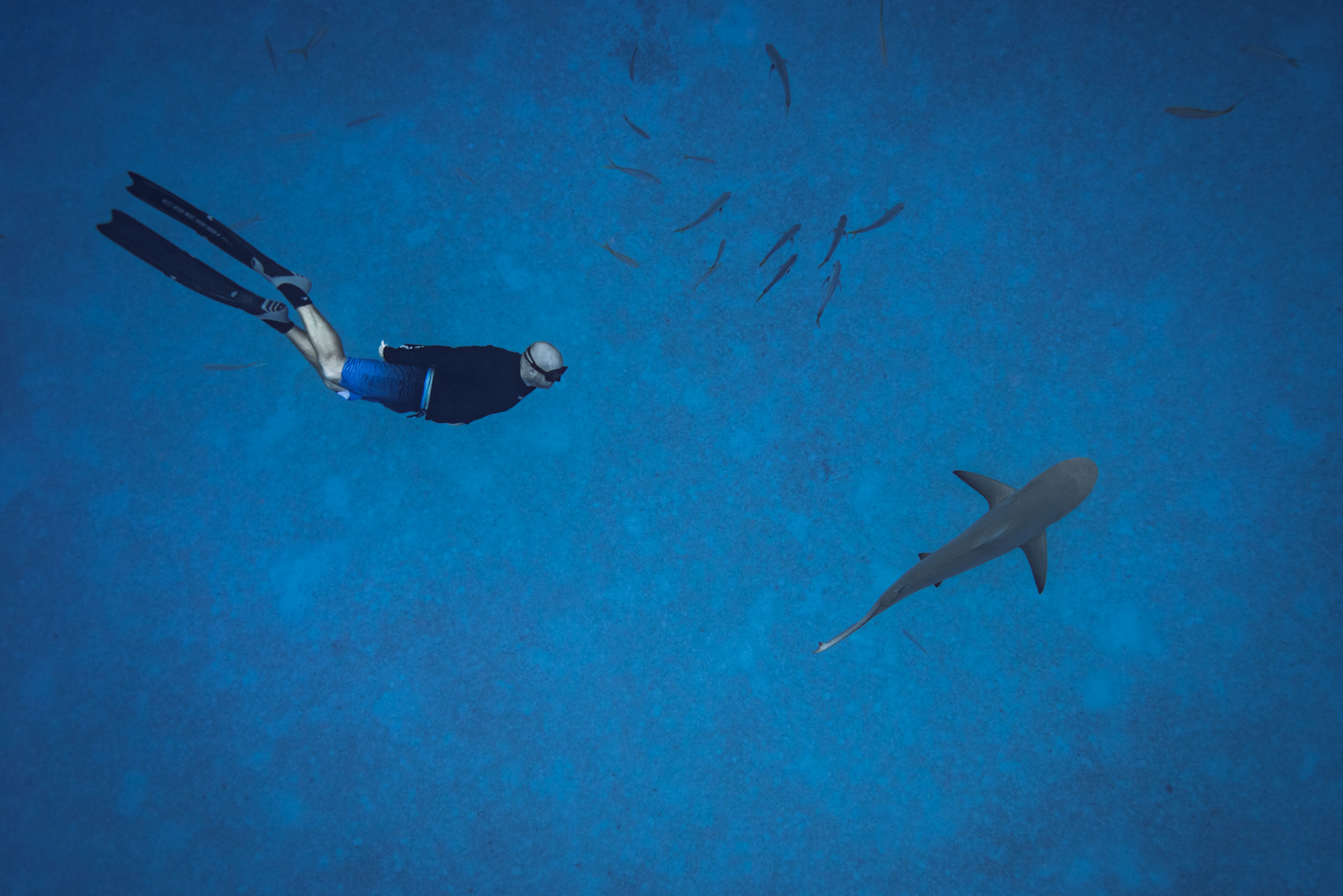 Swimming with sharks in the Bahamas-9.jpg