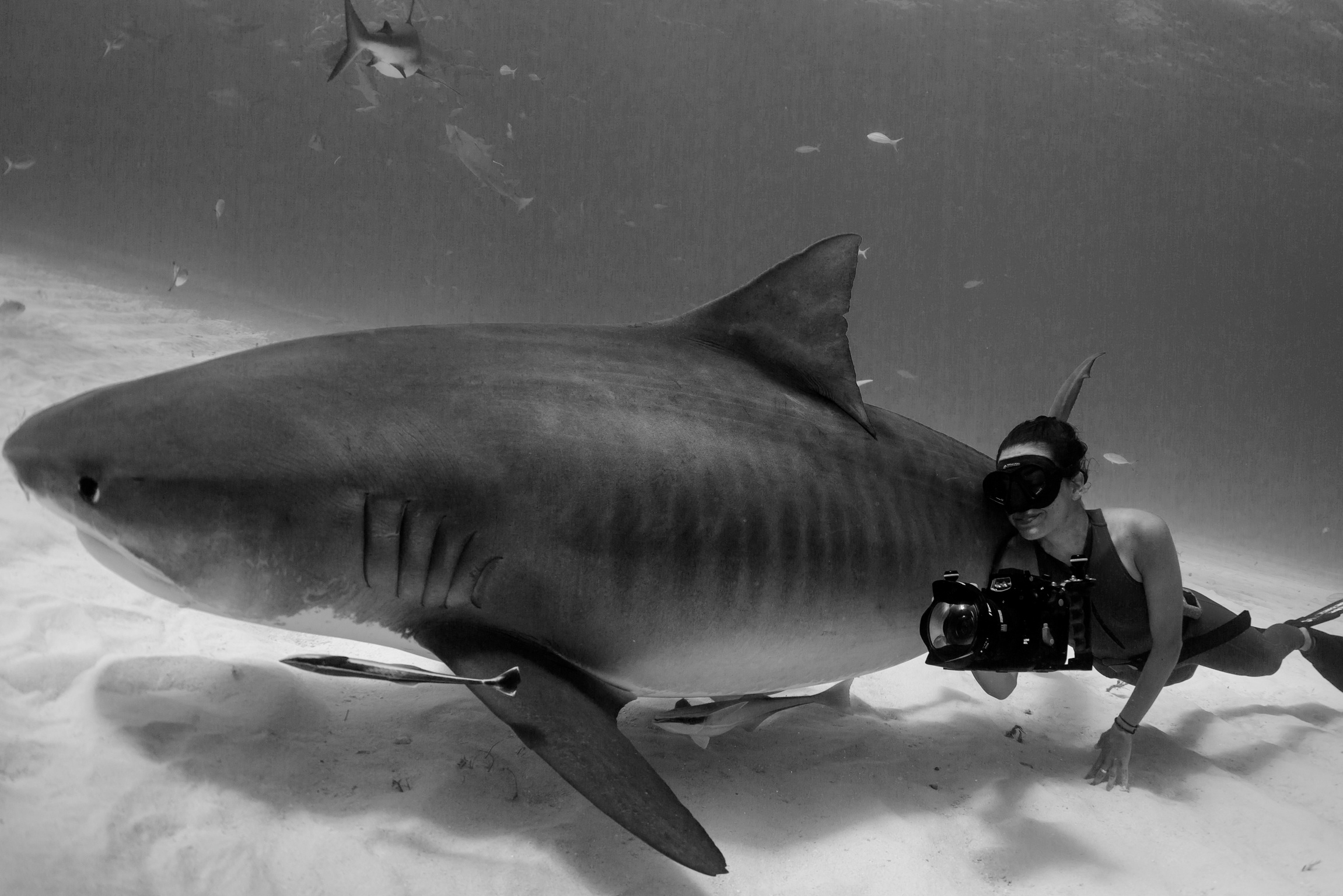 Madison Stewart and tiger shark.jpeg