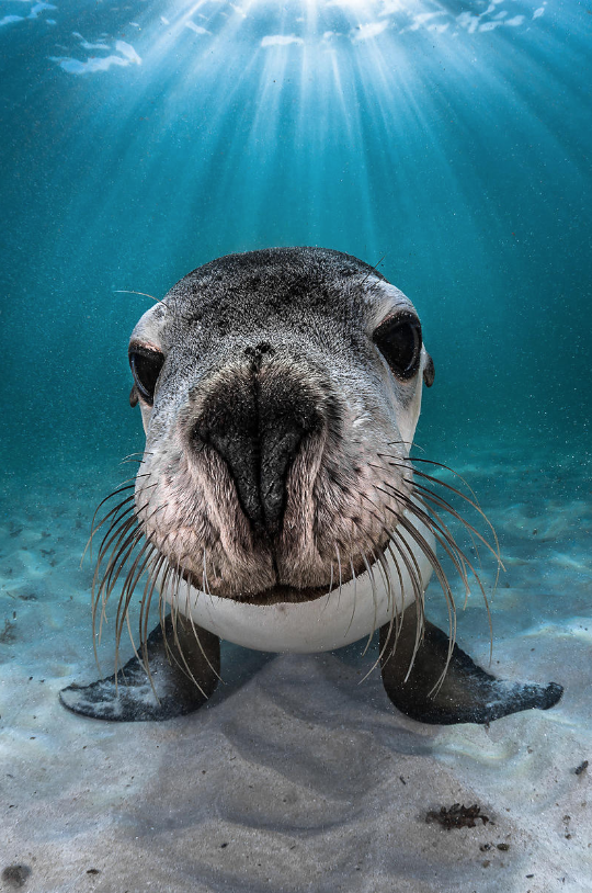 Greg Lecoeur - favourite ocean images of 2019_sealion.png