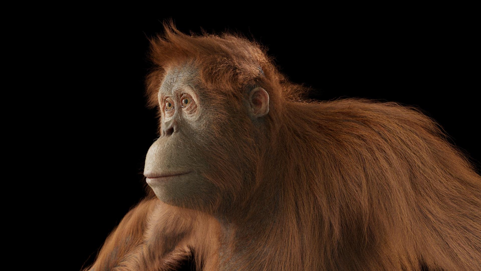 _20170515_orangutan_lookdev_lighttest.jpg