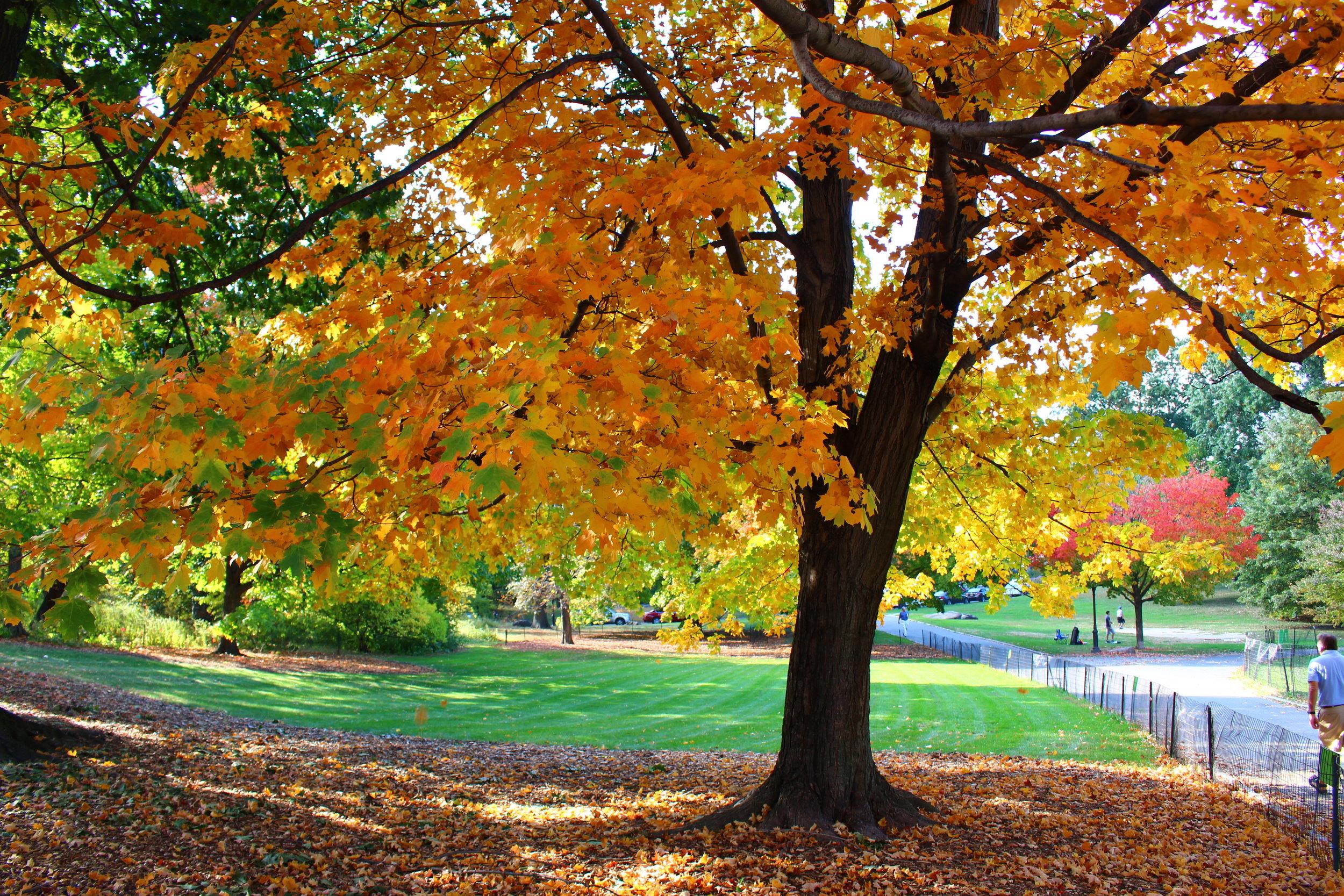 Central Park Fall 2016