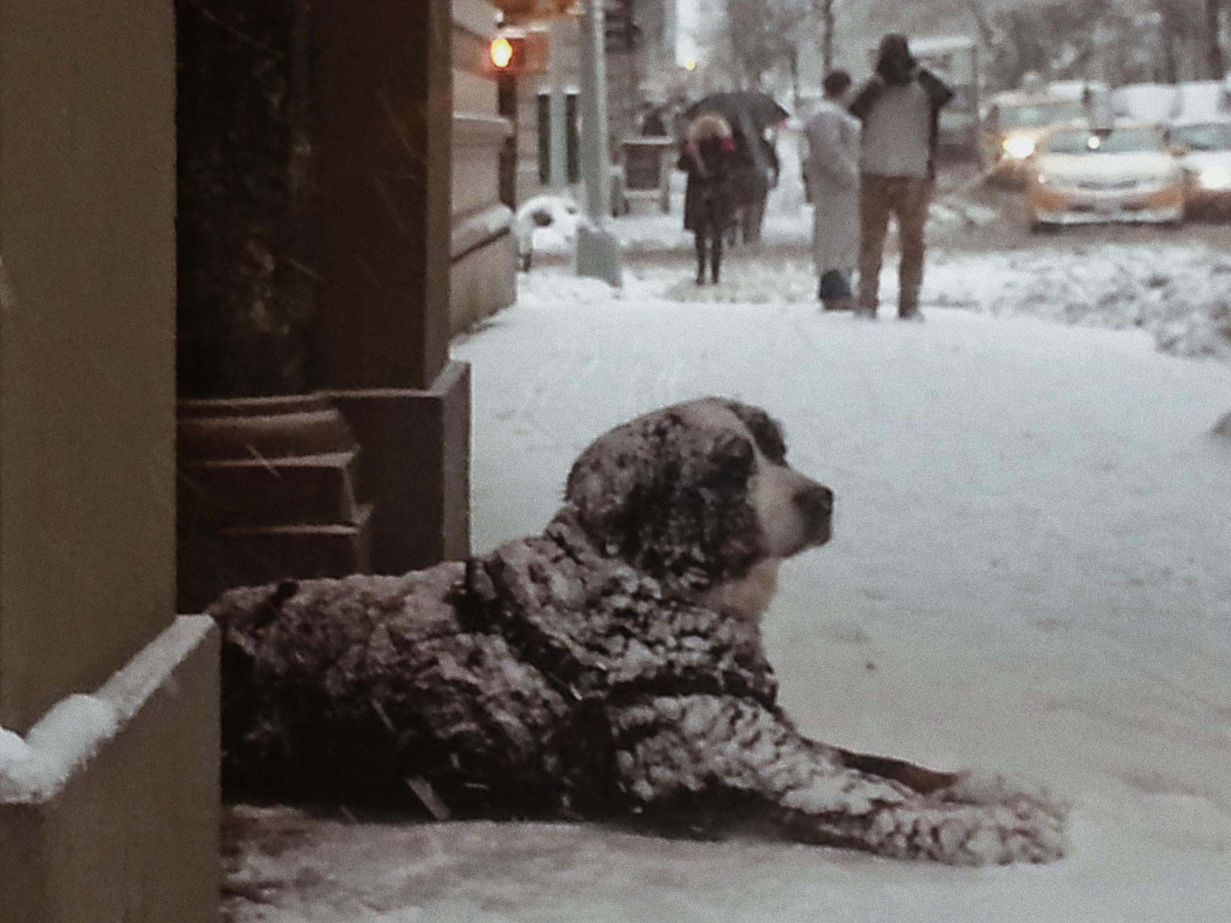 He doesn't seem to mind the cold so much - taken on the Upper East Side
