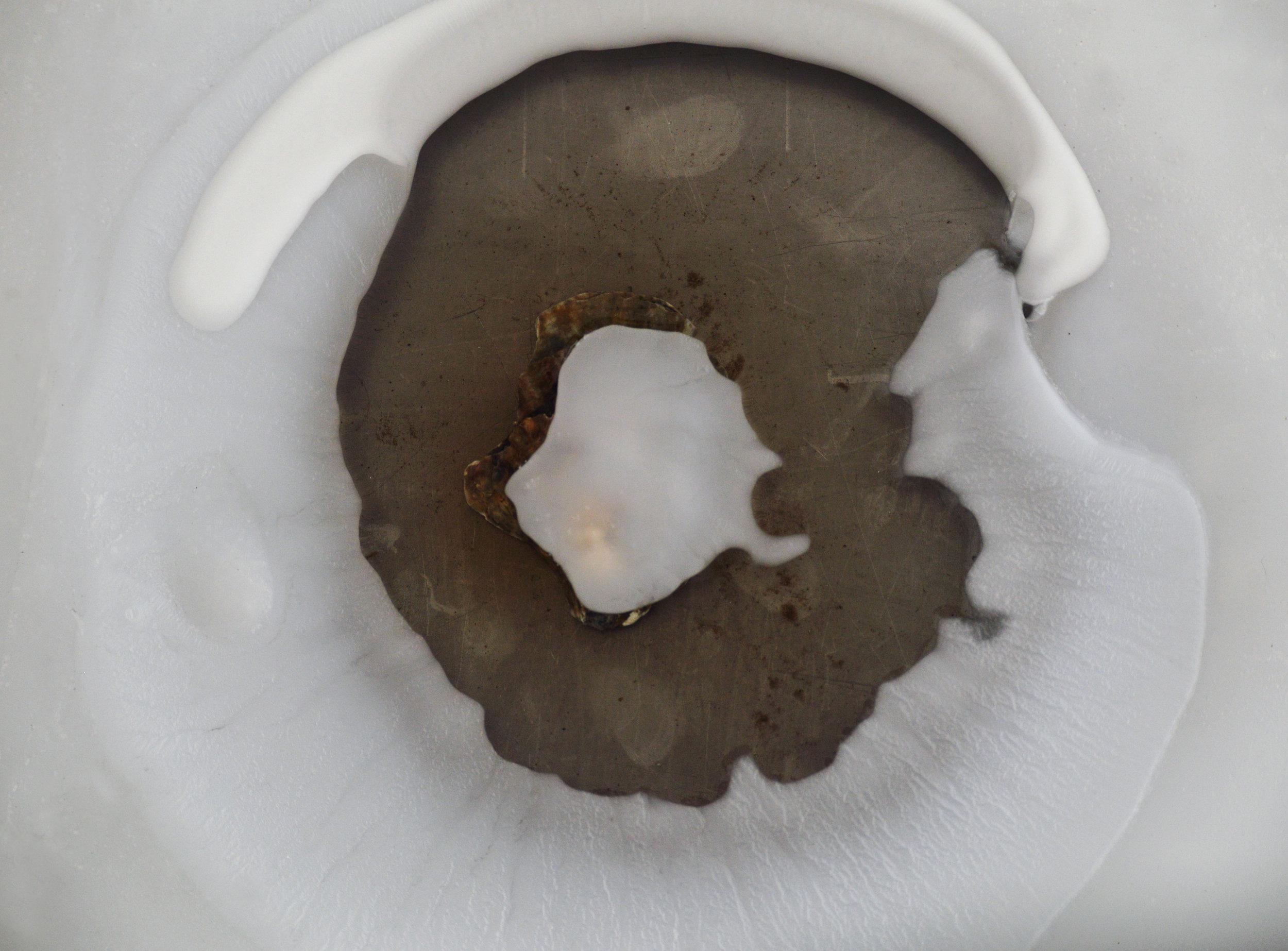 Cryo-fossli n. 2,  Bivalvia