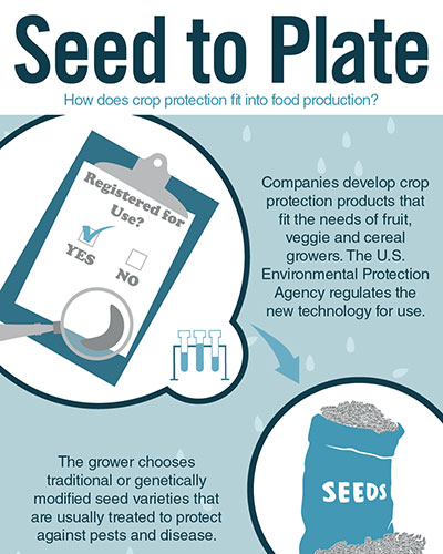 Seed to Plate Image