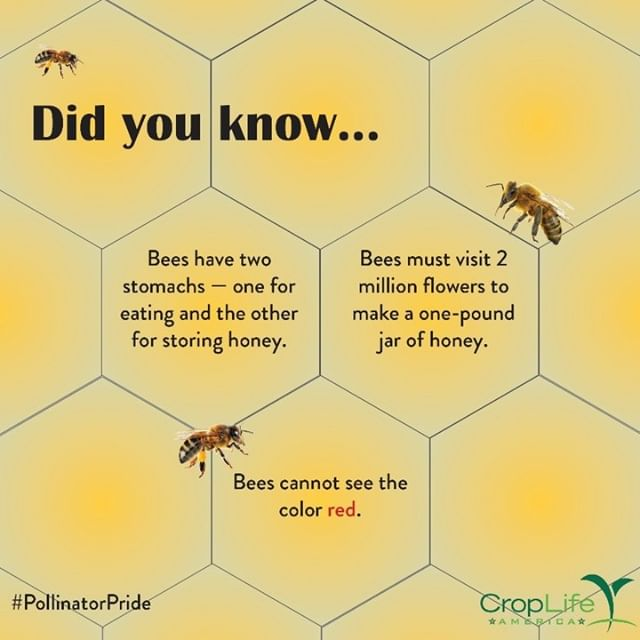 """With two stomachs and two million flowers to visit, Bees really are """"busy""""! #PollinatorPride"""