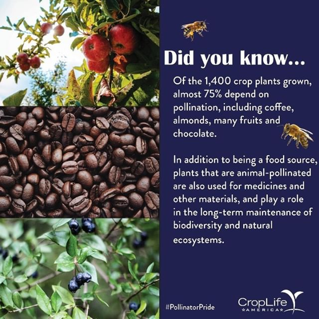 Let's be honest, all you read ^^there was coffee and chocolate... So, let's be mindful of the harmonization pollinators bring to crop plants and to the lifecycle of all ecosystems!