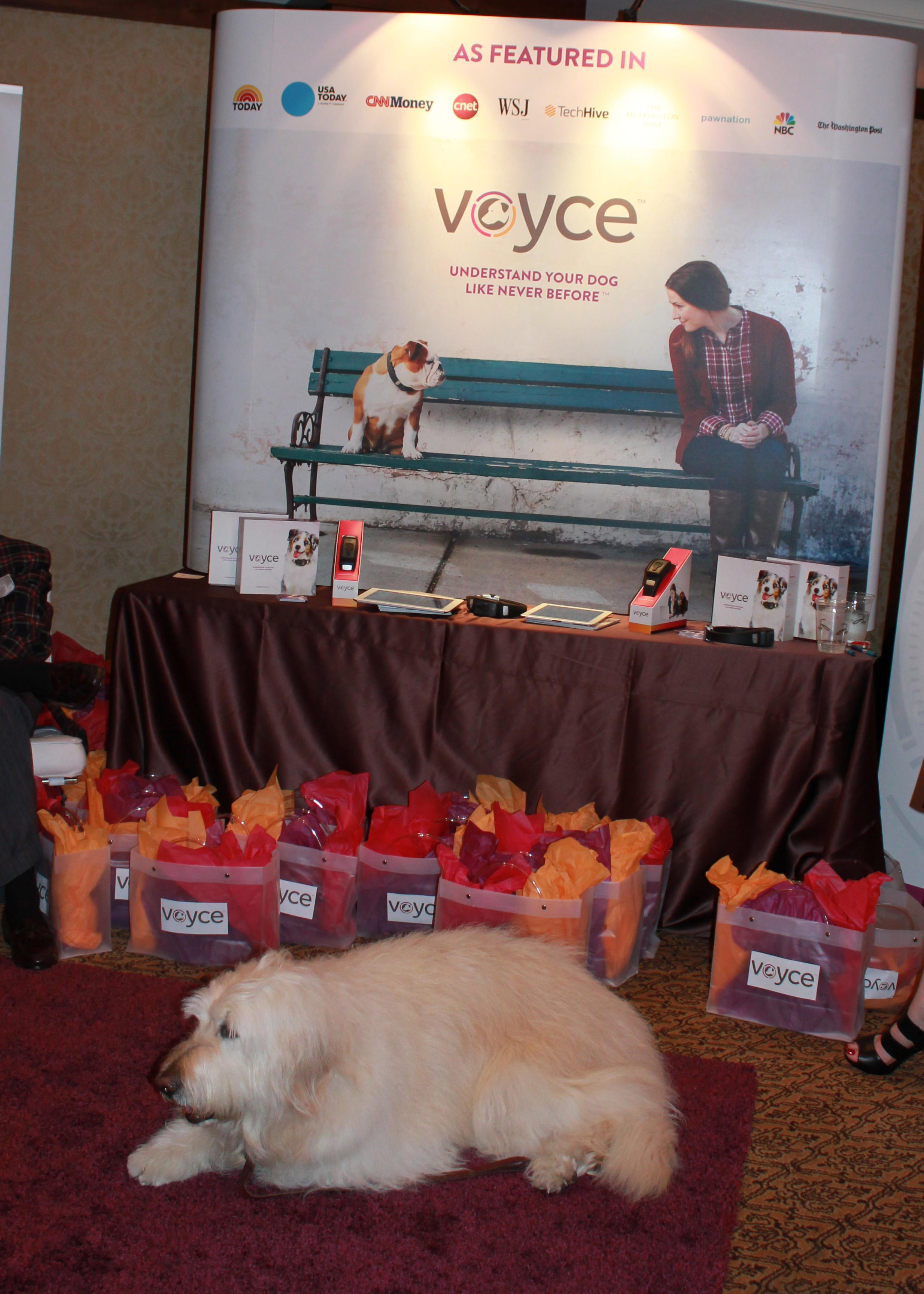 Another adorable dog hawking Voyce fitness-tracking dog collars. Sadly, not included with the gift bags.