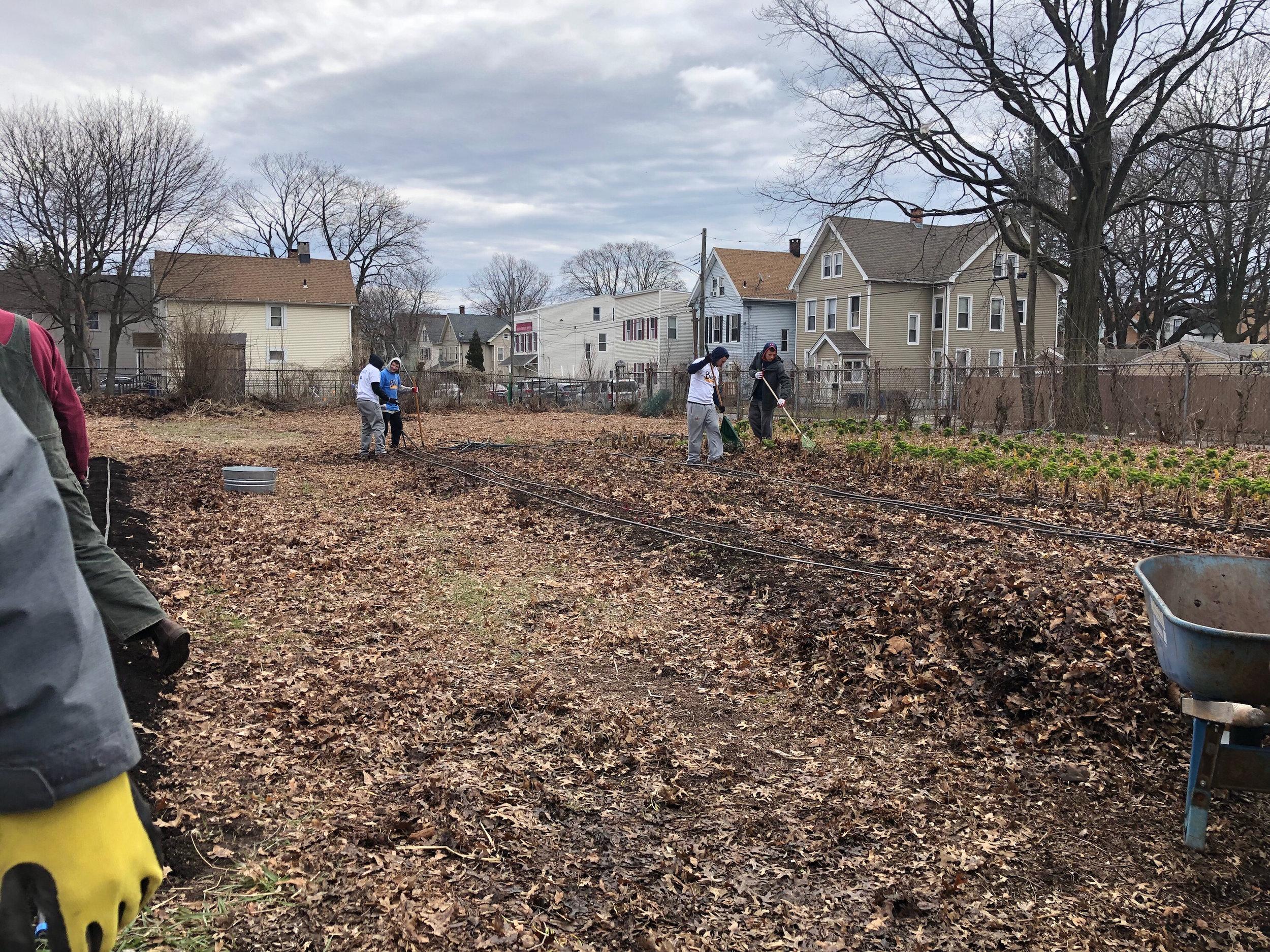 Members of the Quinnipiac fraternity Zeta Beta Tau working on gardens in New Haven.