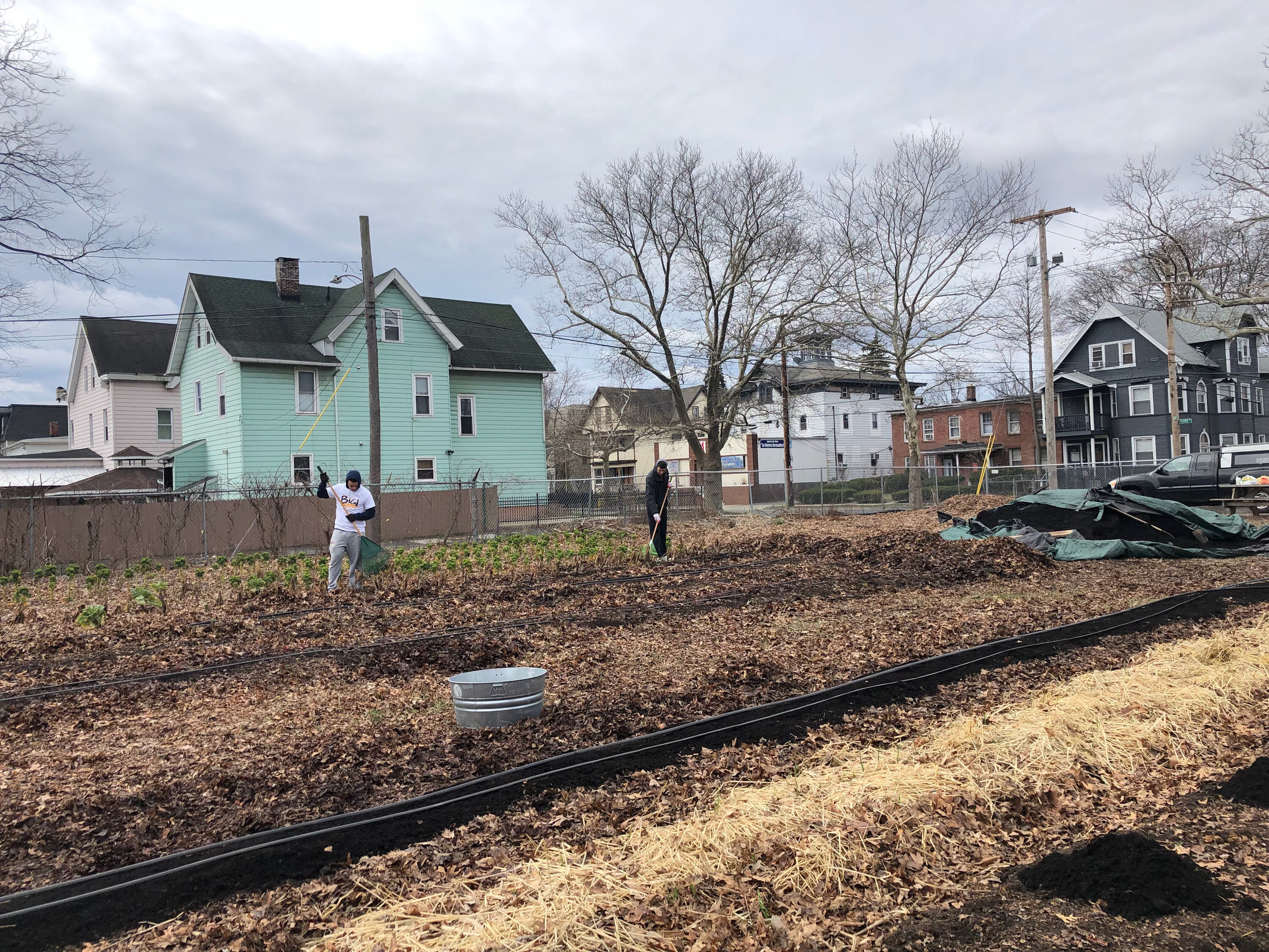 More Zeta Beta Tau fraternity brothers cleaning up the grounds in a New Haven garden.