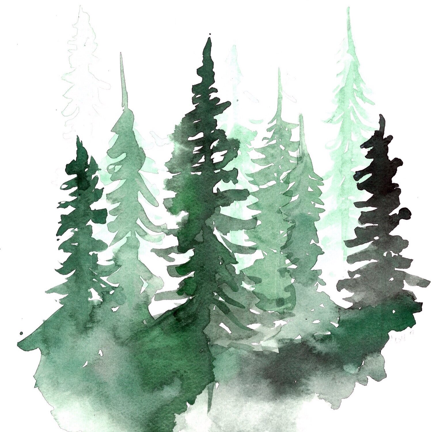 watercolor-pine-trees-lacottfineart.jpg