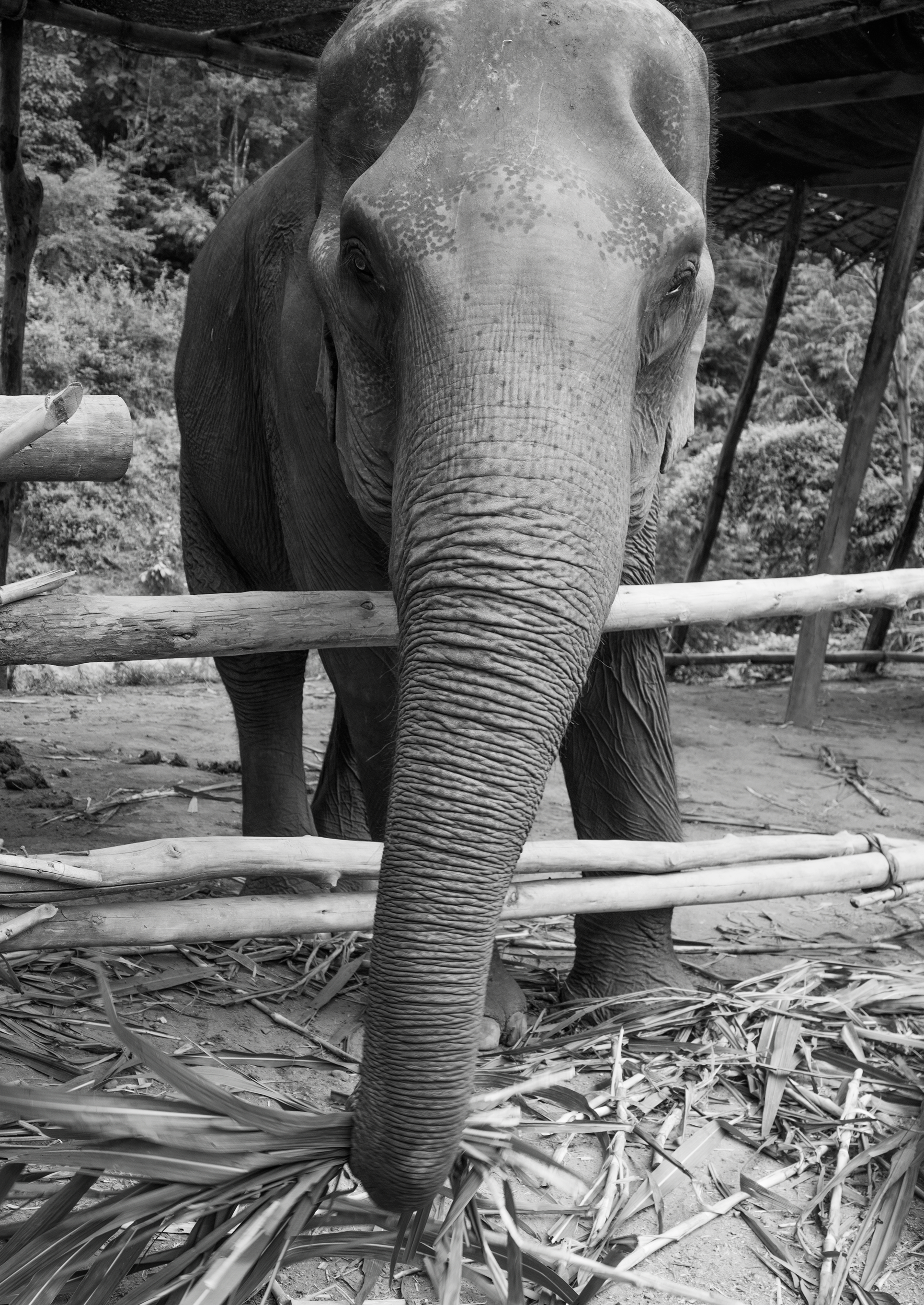 Elephant Jungle Sanctuary Thailand