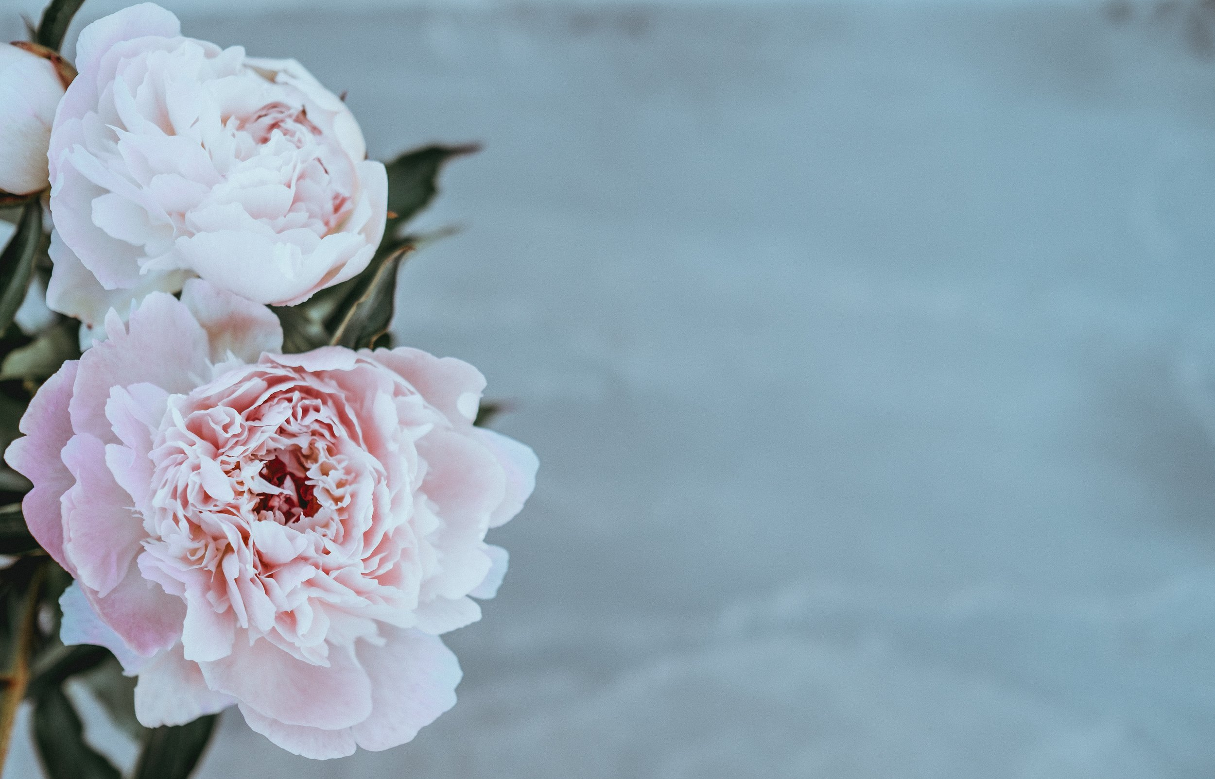 Florists in Derbyshire