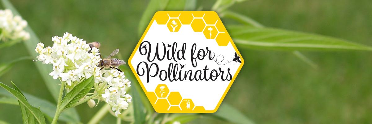 Wild For Pollinators