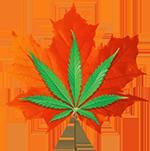 logo-vt.png