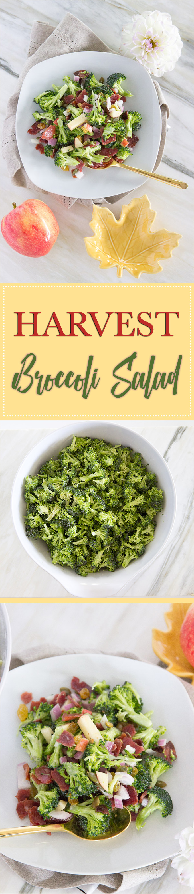 harvest broccoli salad recipe for potlucks and family dinners