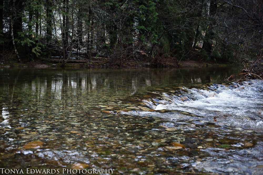 Tonya Edwards | Oroville Photography | fall river in winter sharing new years resolutions