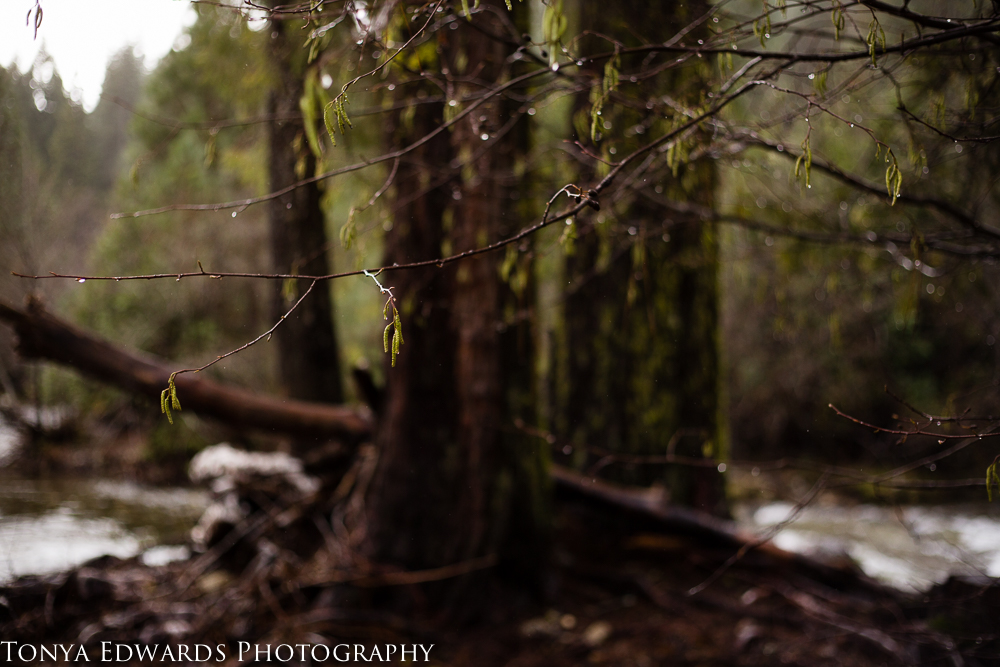 Tonya Edwards | Oroville Photography | river in a forest of evergreens sharing resolutions