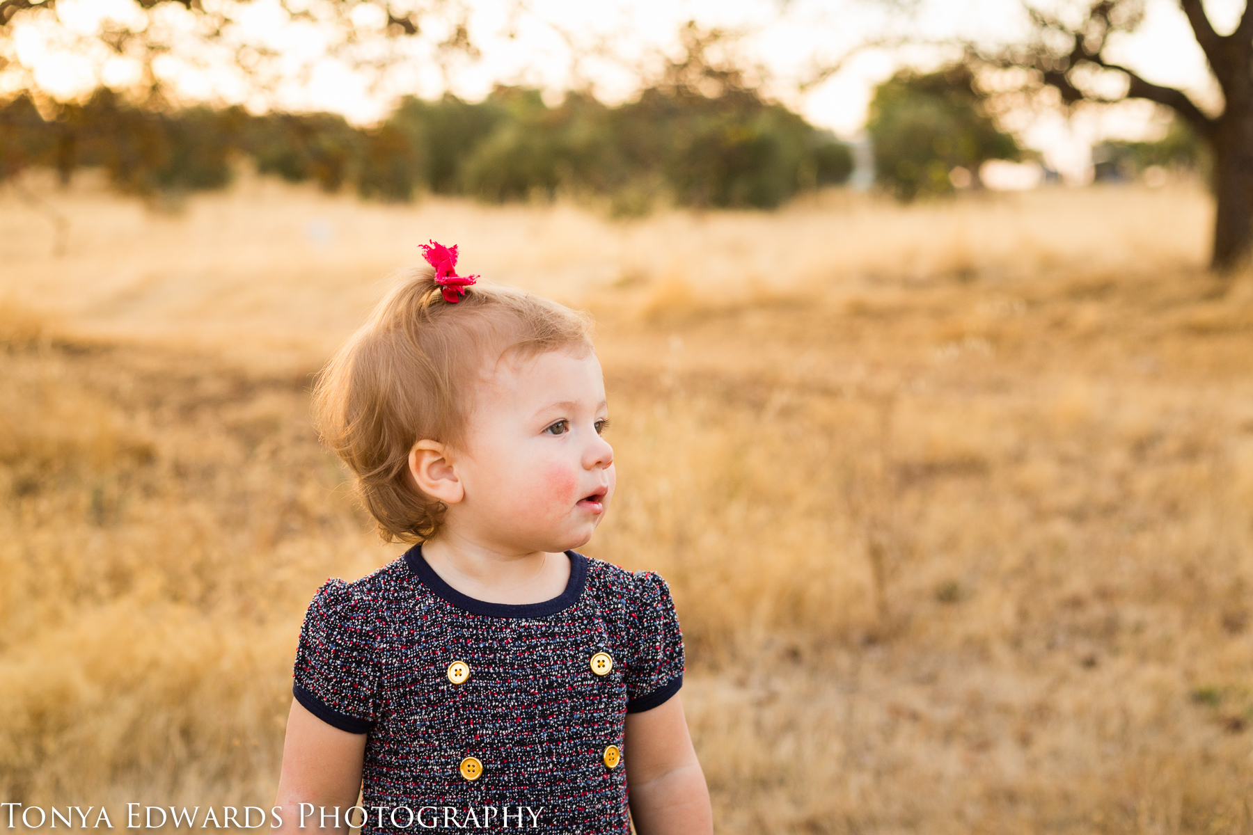 Tonya Edwards | Oroville Family Photographer | little girl with red bow at sunset in a golden field
