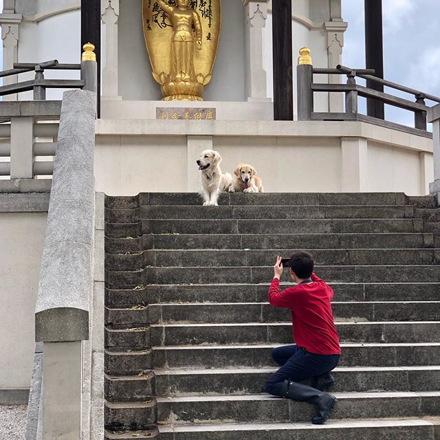 Photoshoot time! What goes on behind the scenes. My two little posing dogs! Swipe right to see the photo 📸